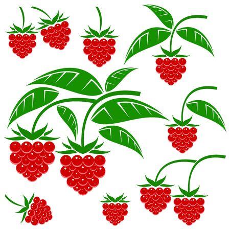 raspberry: raspberries Illustration