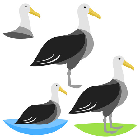 with sets of elements: albatross