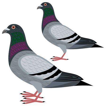 paloma: Paloma Vectores