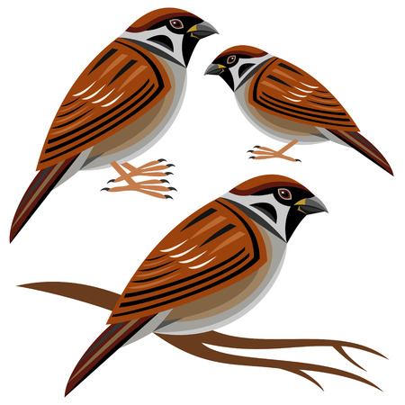 with sets of elements: sparrow