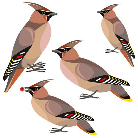 with sets of elements: waxwing