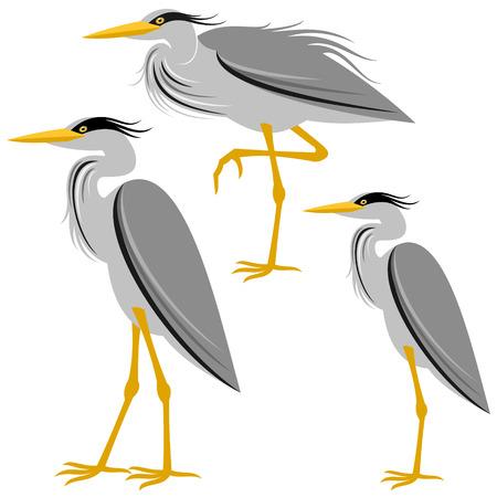 heron: heron Illustration
