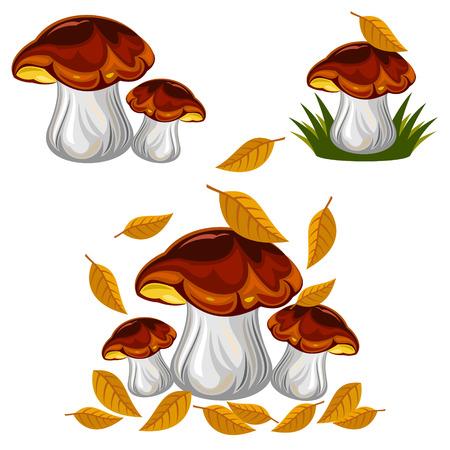 mushrooms Stock Vector - 47073372