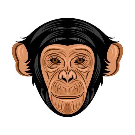 primate: chimpanzee