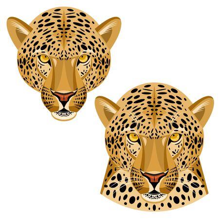 leopard: leopard