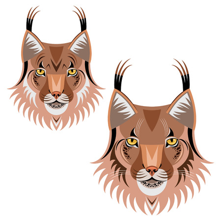 lynx: Lynx illustrations  Illustration