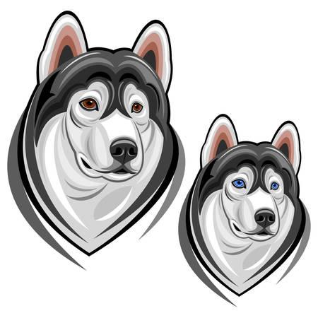 huskies: huskies