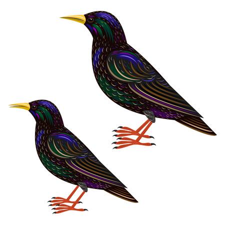 starling: starling Illustration