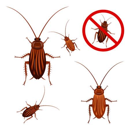 cockroach: cockroach