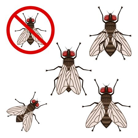 insect flies: fly Illustration