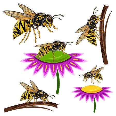 wasp: wasp