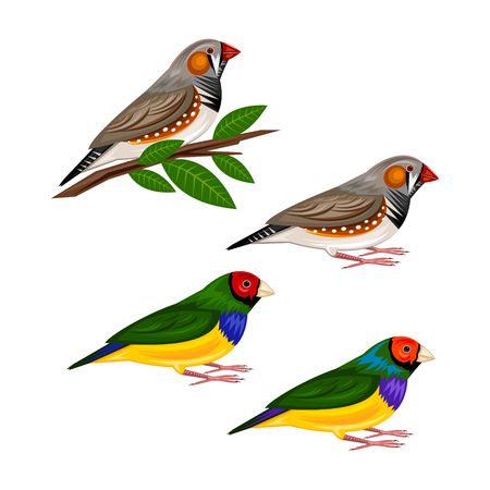 birds on branch: finches Illustration