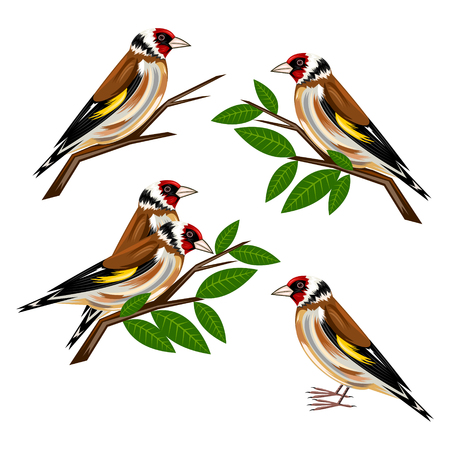 goldfinch Illustration