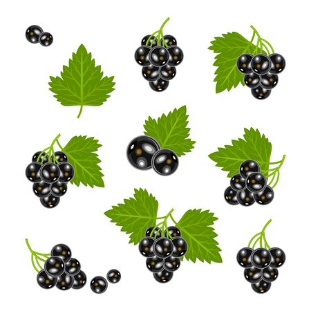currant Illustration