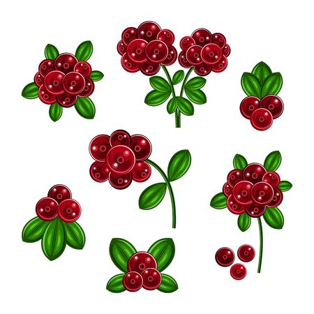 cranberry: cranberry Illustration