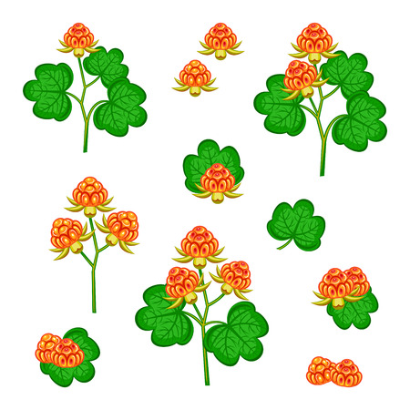cloudberry Illustration