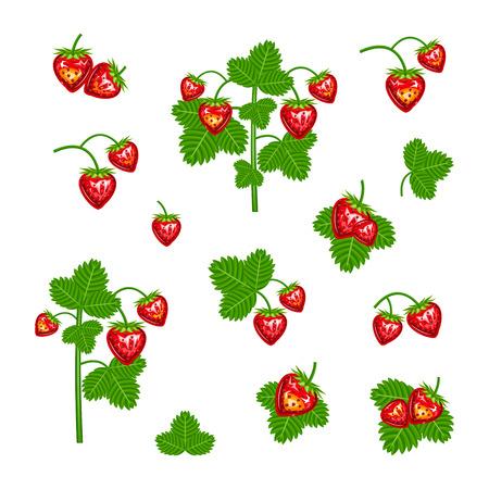 strawberry Illustration