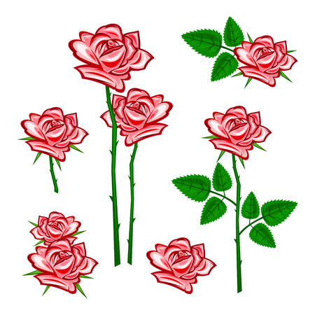 Red roses with a white color in the back. Illustration