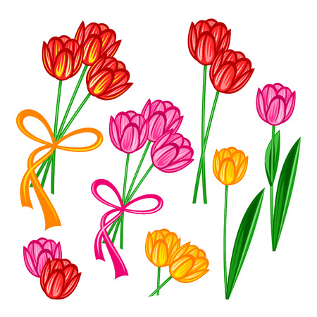 Different Tulips colors