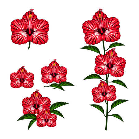 Red hibiscus pattern with white color in the back.