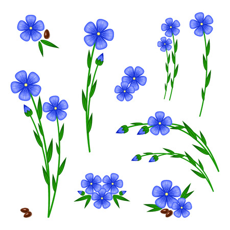 Blue flax with white color in the back.