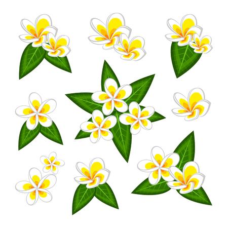 Plumeria frangipan Illustration
