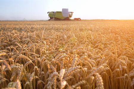 Maaidorser bewegen op het gebied van tarwe met een mooie zonsondergang op de achtergrond