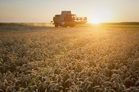 agriculture machinery: Combine harvester moving on the field of wheat with beautiful sunset in the background