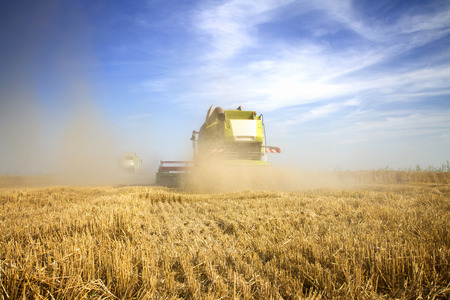 Combine harvester working at the field Banco de Imagens