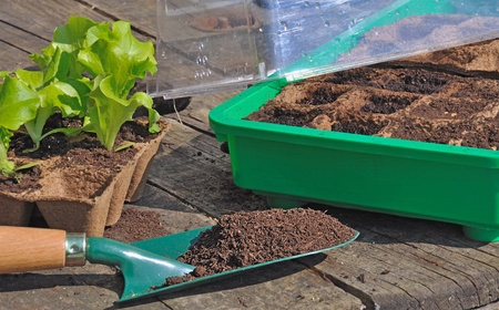 The need to mini greenhouse with seedlings and plants at the bottom of salad Фото со стока - 9241114