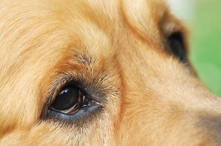 suplicando: Ojos de s�plicas  Foto de archivo