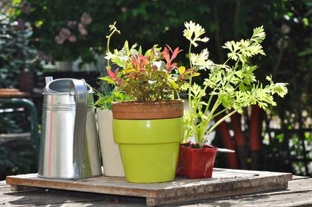 regando plantas: Bote, riego de plantas en una tabla de jard�n