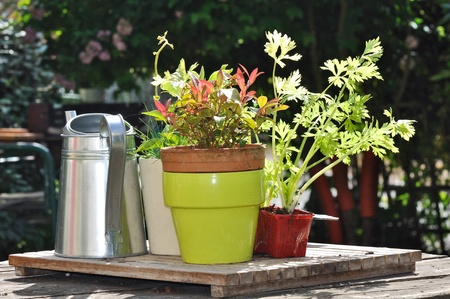 watering plants: Pot, watering plants in a garden table Stock Photo