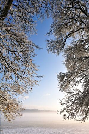 Tree branches against a backdrop of blue sky facing the morning mist Stock Photo - 10550539