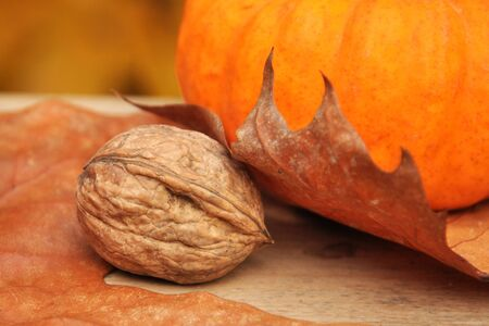 A nut under a leat and next to a pumpkin