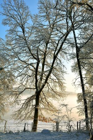 Tree branches against a backdrop of blue sky facing the morning mist Stock Photo - 10553448