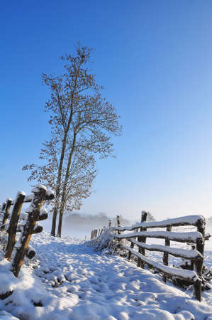 Barriers to guide the cattle with access to a snowy meadow with a tree on blue sky background Stock Photo - 10553446