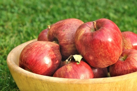 bowl full of red apples photo