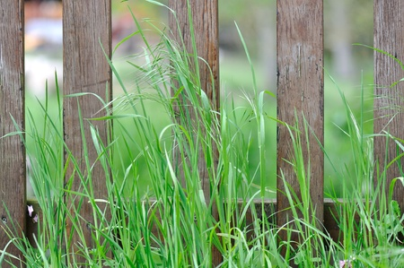 delineate: wooden fence in the high grass