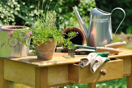 gardening tools and plants arranged on a wooden table in the garden