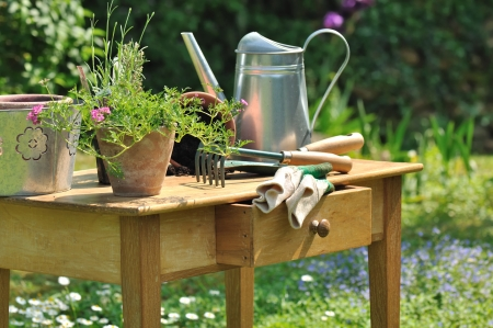watering can: gardening tools and plants arranged on a wooden table in the garden