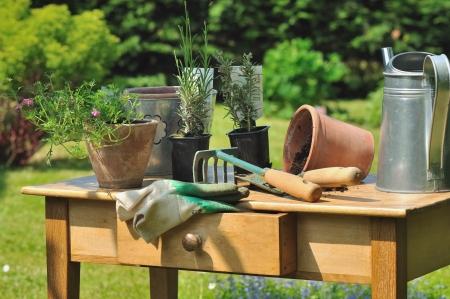 Gartengeräte und Pflanzen auf einem Holztisch im Garten angeordnet Standard-Bild - 13805015