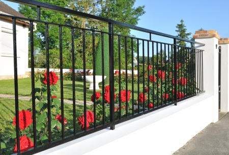elegant black metal fence in front of red roses Stock Photo