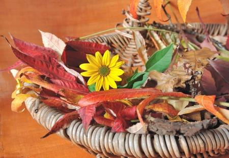 daisie: decorazione su sfondo arancione con foglie di autunno e margherita in un cesto Archivio Fotografico