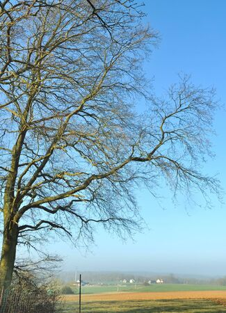 branches of a large oak tree in front of a rural landscape Stock Photo - 16262515