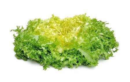 bitterness: fresh green salad chicory isolated on white background Stock Photo