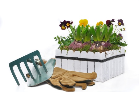 flower pot with hyacinths and tools for planting on white bachground
