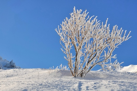 branches of a shrub covered with snow under a blue sky Stock Photo - 17631868