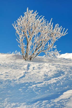 branches of a shrub covered with snow under a blue sky Stock Photo - 17631870