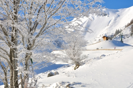 branches of a tree covered with snow in front of a lift under a beautiful blue sky Stock Photo - 17631871